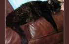 Livin' and Dyin' … Lessons From My Kitty