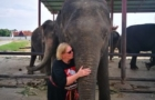 Life Lessons from My Elephant